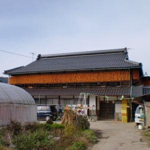 市田柿100年