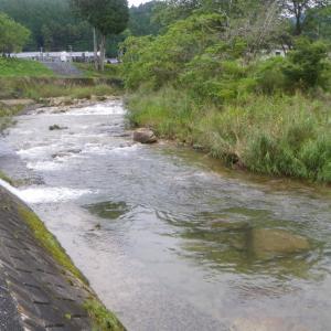 天竜川右岸側の河川で渓流釣り