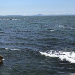 イカと潮汐・潮位の関係