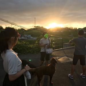 2019秋犬旅志摩その1
