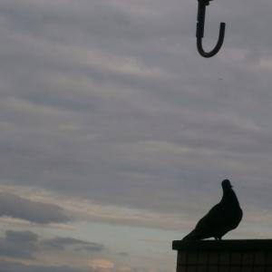 新しい住まいの誤算その①  鳩との戦い