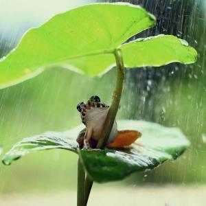 「抜苦与楽」「慈悲」の実践のあり方(六波羅蜜の実践法の一つ「布施」の考え方)8