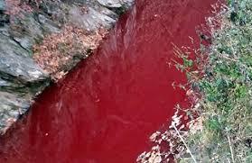 #アフリカ豚コレラ 韓国の杜撰すぎる「殺傷豚埋設処理」で血で染まった川・・【韓国KBS】
