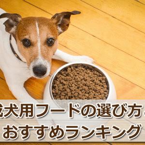 成犬におすすめのドッグフード6選!選び方の5つのポイント