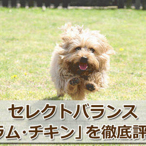 セレクトバランス「ラム・チキン」を辛口評価【口コミ・評判】