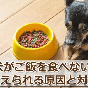 犬がご飯を食べない!考えられる7つの理由