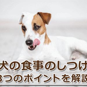 【犬の食事のしつけ】困った行動への対処法と飼い主の心得