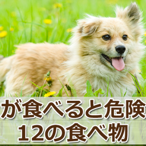 食べたらダメ!「犬が食べてはいけないもの」12のリスト