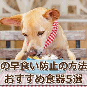 犬の早食い防止方法&おすすめ食器5選【獣医師の卵が伝授】