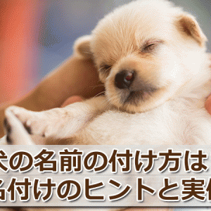 犬の名前の付け方は?素敵な名付けのヒントと実例