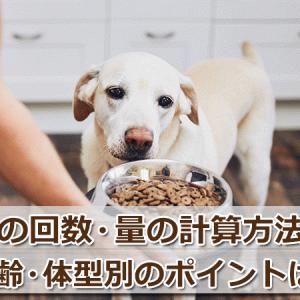 犬の餌の回数や量の計算方法!年齢や体型別のポイントも解説