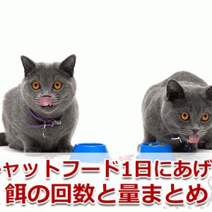 猫の餌、一日何回あげたらいい?最適な回数や量は?