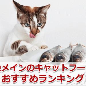魚メインのキャットフードのおすすめランキング【5選】