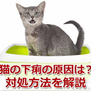 猫が下痢をしている?考えられる原因と対処方法