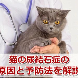 尿結石症の原因と予防法。ストルバイト結石に良いフードは?