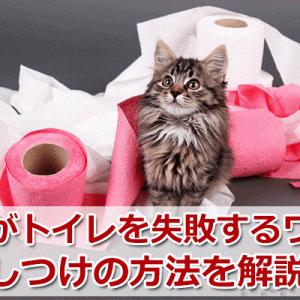 猫がトイレでしない!失敗の原因とおすすめの対処法を解説