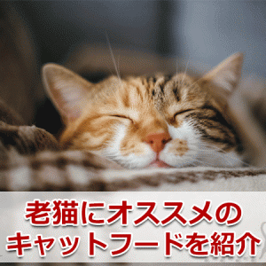 老猫におすすめのキャットフードランキング【5選】