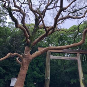 名古屋水族館と 熱田神宮
