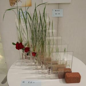 青森県八戸市 ハッチでフラワーデザイン展が開かれます