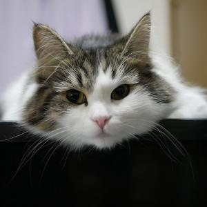 いつも近くに 猫さんに感謝!