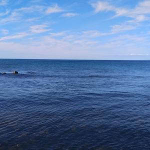 9月2日 日本海 アキアジ‼️