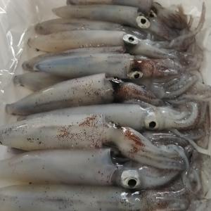 10月9日 マメイカ 小樽方面
