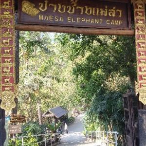 🇹🇭✈タイ旅行記【6日目】〜象🐘キャンプで象乗り & チェンマイのお寺や街歩き