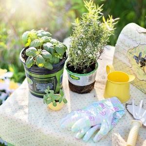 花と緑と土で、心身を癒すセラピー