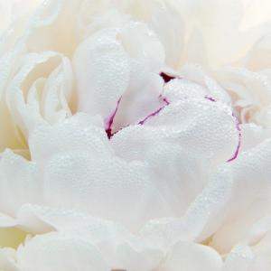 今の、じぶんの心に寄り添うお花を知る。そんなレッスンです。