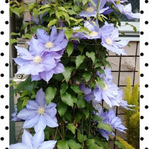 美しい花との出会いが気づかせてくれたこと
