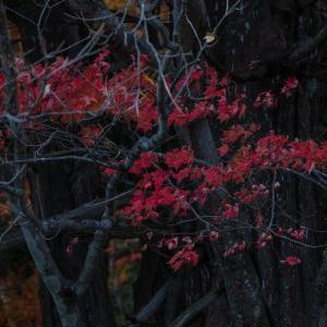 湯ノ湖で紅葉を切り取る
