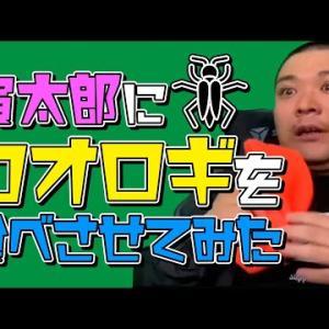 【動画】【ドッキリ】寅太郎にコオロギ食べさせてみた!【リベンジ】