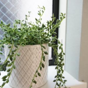 【IKEAの観葉植物】フェイクグリーンがおしゃれで本物みたい!ズボラインテリアに救世主