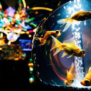横浜ワールドポーターズに水族館「アンダーウォータースペース」が期間限定でオープン