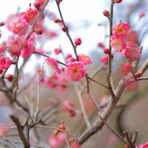 『ペンション恋は桃色』を観た感想。