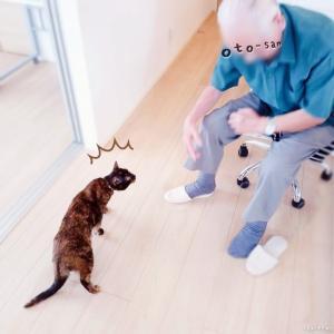 お義父さんが来た*老人と若猫のご対面 | 日々ログ