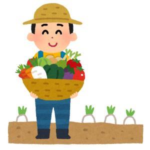 親の転勤で上京し大人になった今、田舎暮らしを夢見る理由