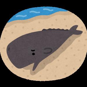 ザショウクジラ 【天変地異の前触れか】