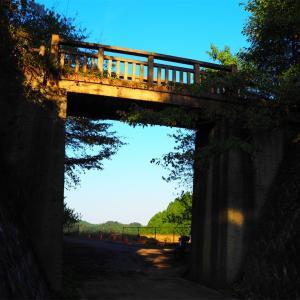 【あきる野市】南沢林道に架かる幻想的な橋を見に行く!【南沢基幹作業道】【南沢間伐作業道】