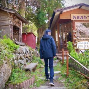 東吾妻町岩井親水公園にラッパ水仙を見に行ったら枯れていた話