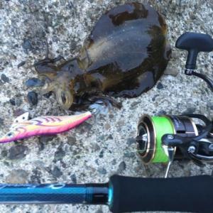 17セオリー 2508PE-Hでアオリイカを釣ってみた感想