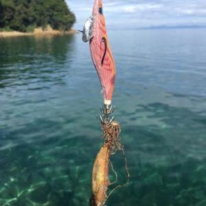 エギングでアオリイカが釣れない人が1日で結果を出す方法