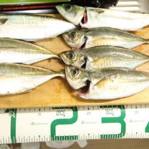 12月5日 神戸空港で良型アジと中サバのサビキ釣り!