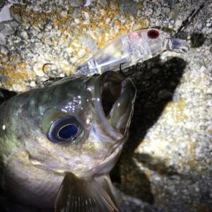 瀬戸内海のメバリングで一番釣れる時期が4月~5月の理由