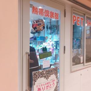 【店舗情報】亜熱帯倶楽部~吉祥寺店~のチンチラ情報