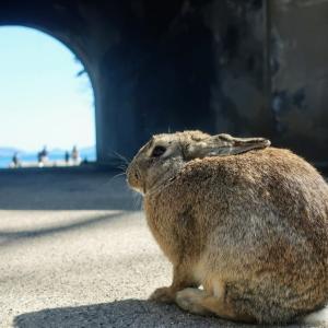 ウサギの島、毒ガスの島『大久野島』