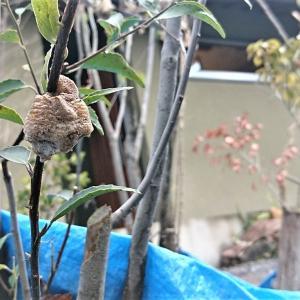 メジロのエサ台を作る~生涯添い遂げる鳥