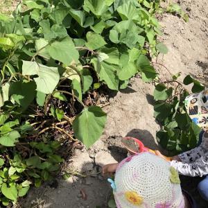 1歳のサツマイモ掘りに必要な持ち物リスト