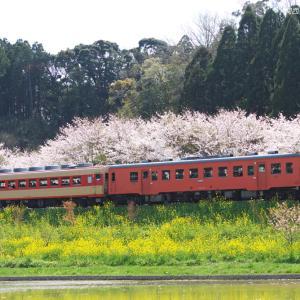 いすみ鉄道 新田野 (1)  ~桜と菜の花の築堤~