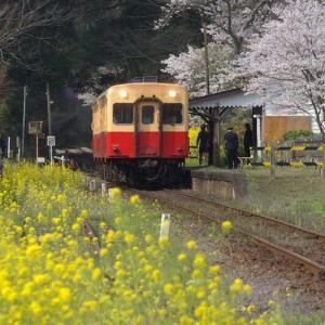 小湊鉄道 月崎 (2)  ~桜と菜の花の駅~